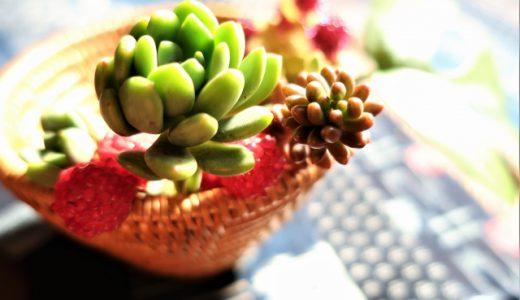 多肉植物のススメ